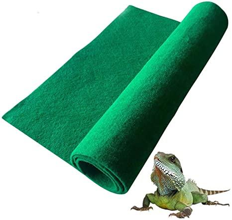 terrarium-carpet