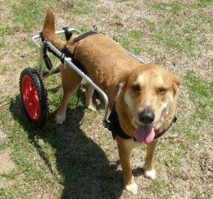 dog-wheelchair