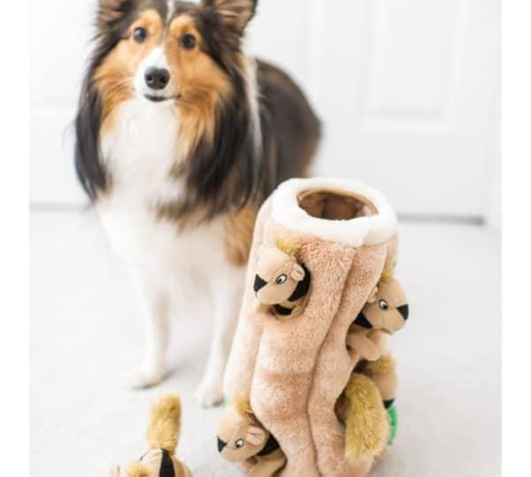 outward-hound-hide-a-squirrel