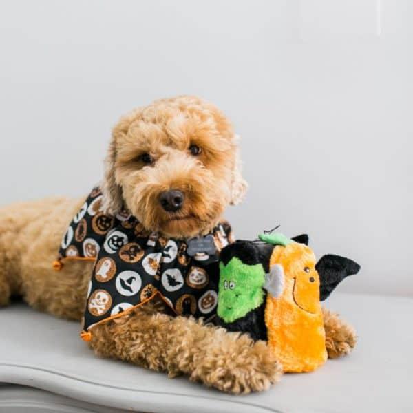 zippy-paws-halloween-squeakie-buddies