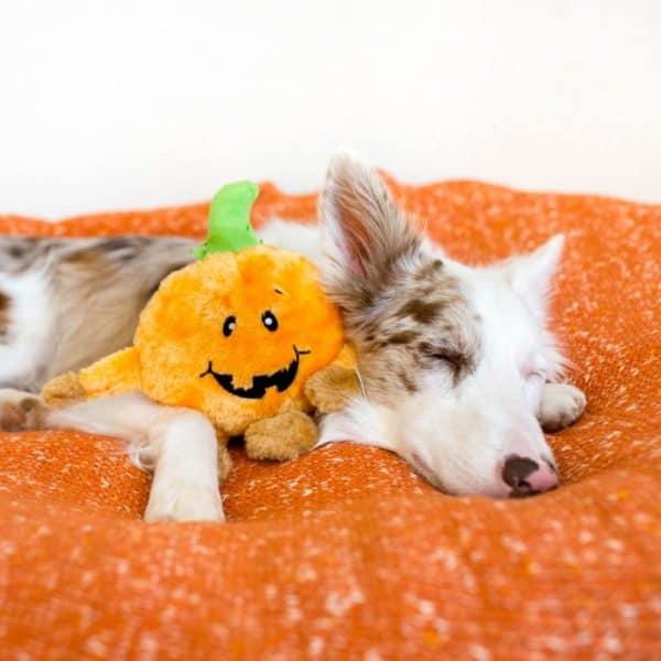 brainey-pumpkin