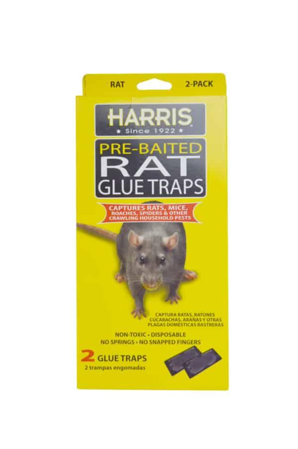 harris-rat-glue-trap-2ct