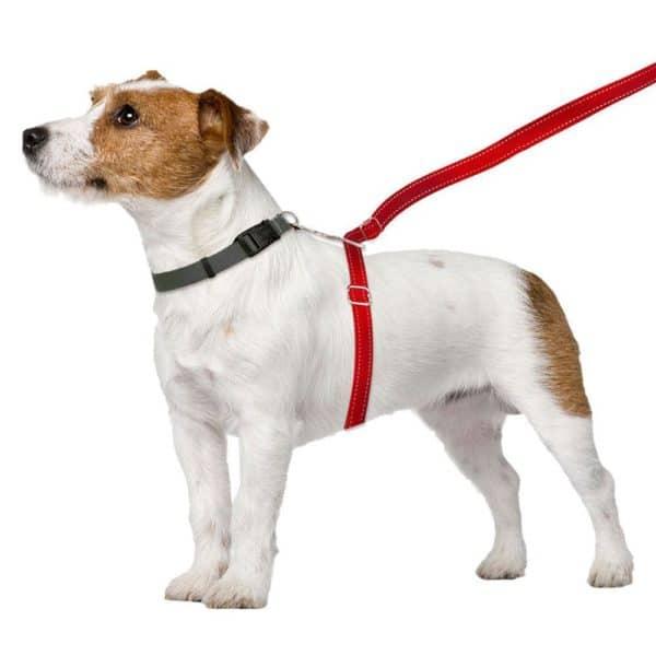 thunder-leash-medium-large-red