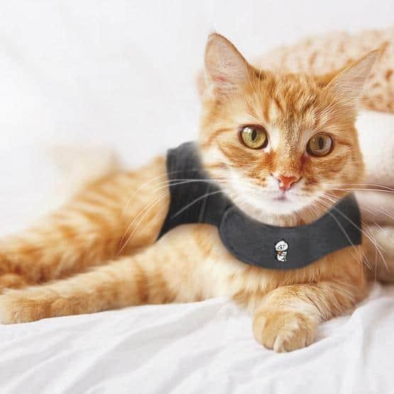 thundershirts-for-cats-large2