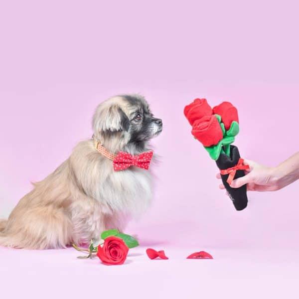 zippy-paws-roses