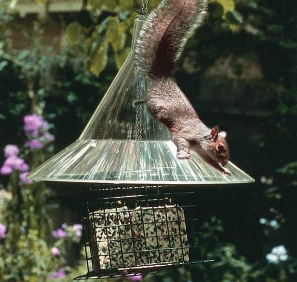 squirrel-away